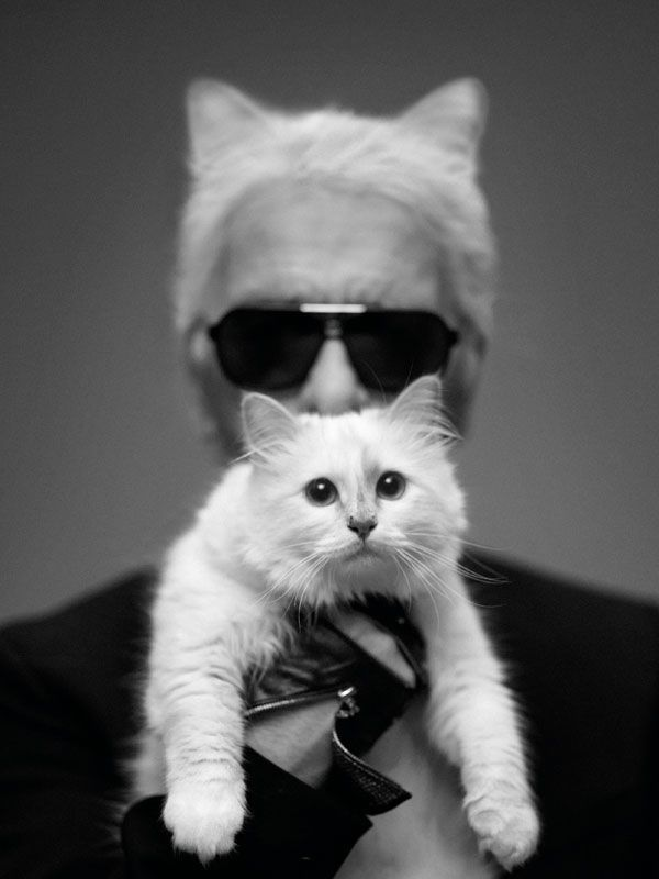 Choupette, the Kate Moss of cats