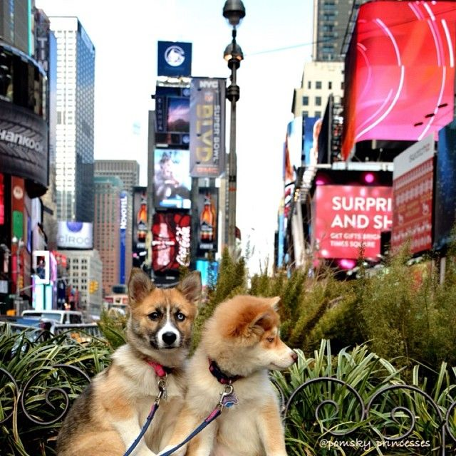 11 Surprising Facts About the Friendliest Dog Cities - New York, I knew it!