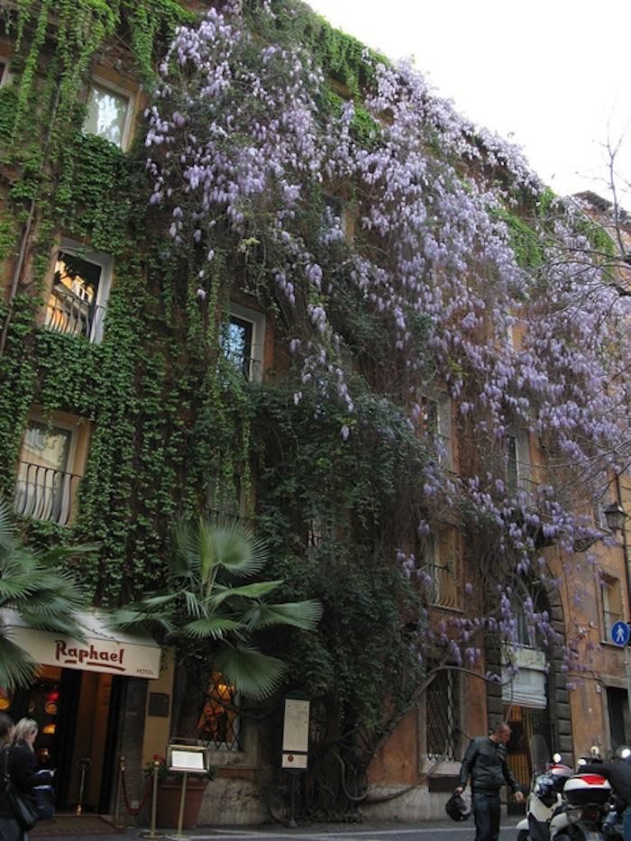 The Original Vertical Garden: Hotel Raphael in Rome Gardenista