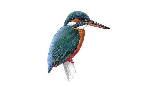 Bird calls & songs