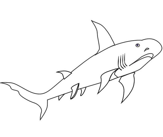 55 Shark Shape Templates Crafts Colouring Pages Shark Coloring Pages Shark Pictures Animal Templates