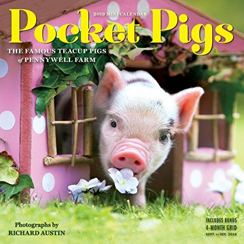 Pocket Pigs 2019 Calendar: The Famous Teacup Pigs of Pennywell Farm - The teacup pigs of Pennywell Farm in Devon, England, are plump, palm-size, and full of charisma—and they're back for another playful year in an adorable mini format that's perfect for using at your desk or hanging in a locker. A pack of musical piggies gathers around a teeny piano. A spotted pig ...