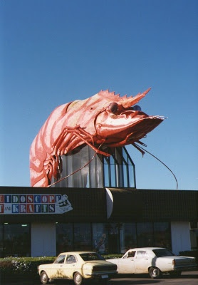 The BIG Prawn back in the 1990's when it was still RED! Now, I think it's gone ... Ballina, New South Wales #Australia