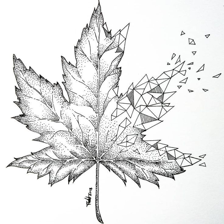 кленовые листья рисунки карандашом документов