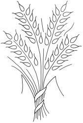 Kansas Wheat 14