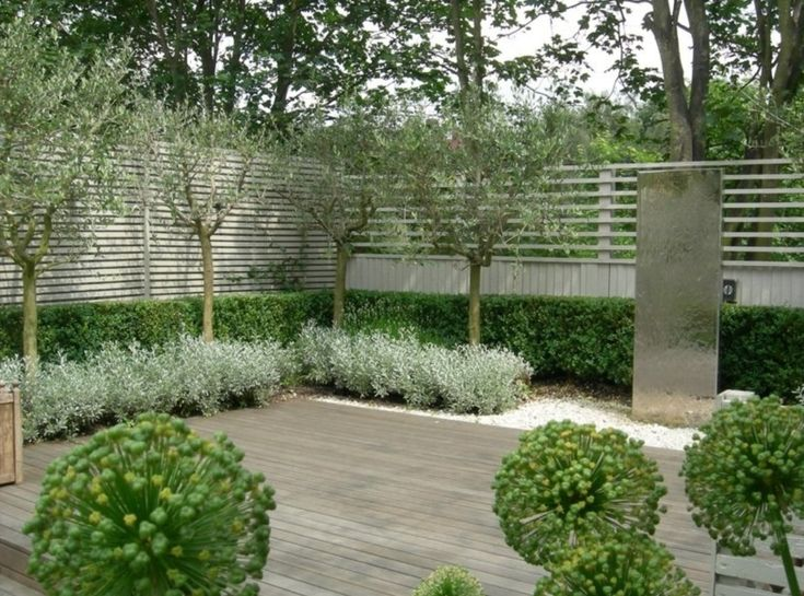 olive trees and boxwoods