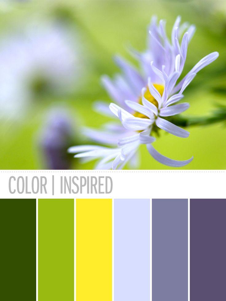 Spring Garden     flickr user: NilDesperandum_     #flower #color #palette