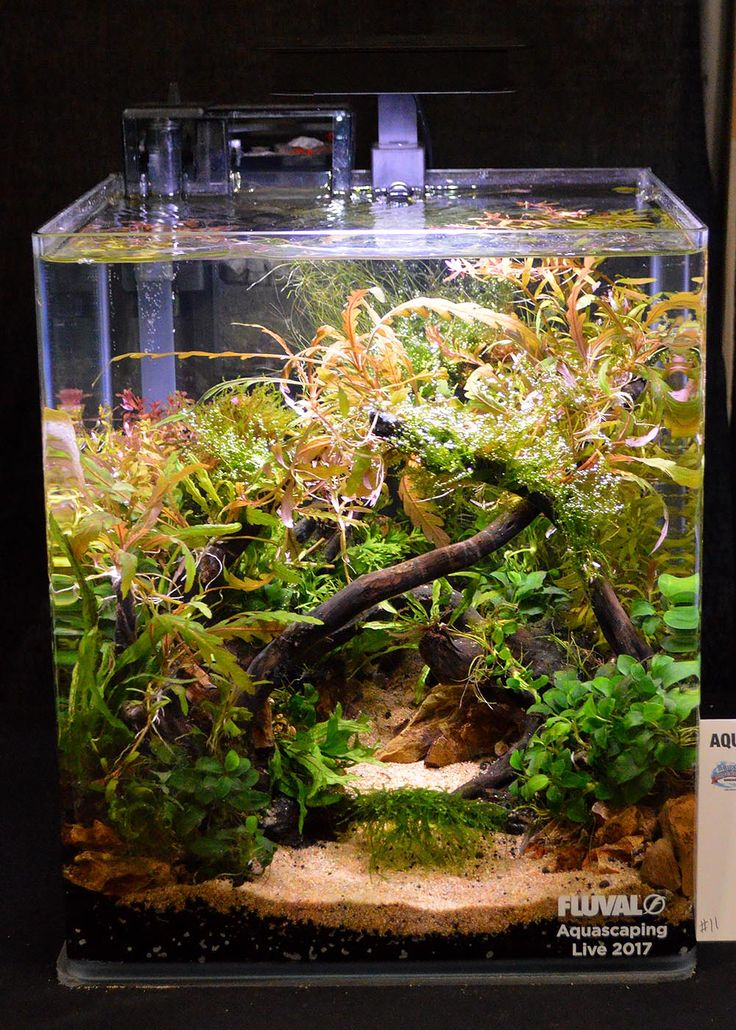 Would be great for a Betta fish.