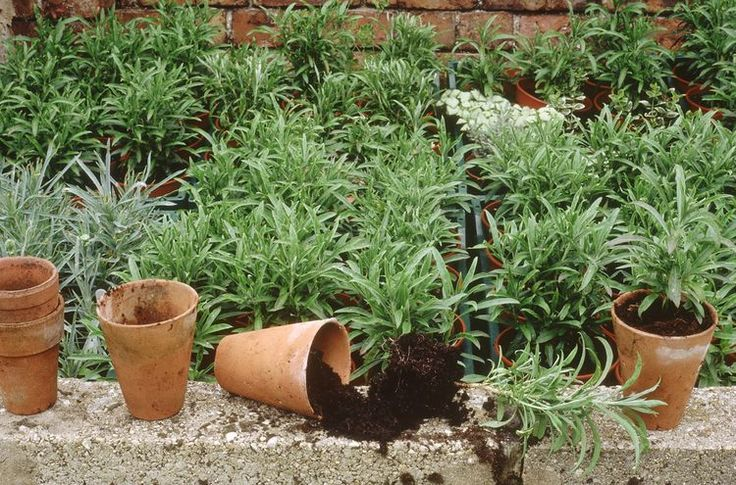 How to Grow New Plants from Plant Cuttings