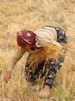 anadolu kadını fotoğrafları - Google'da Ara