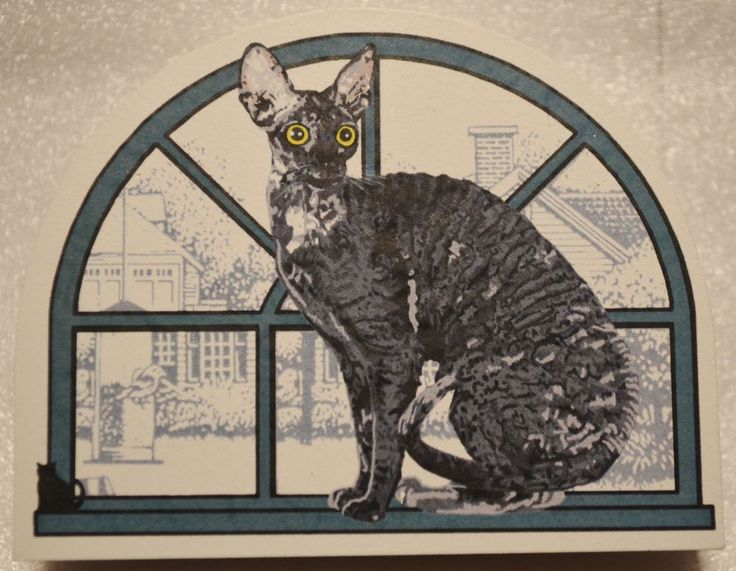 Cat's Meow Village Purebred Cats:  Cornish Rex #collectibles
