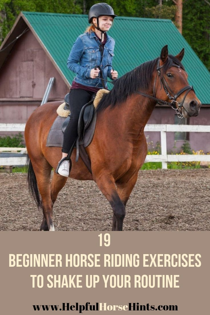 19 Beginner Horse Riding Exercises To Shake Up Your Routine Horseback Riding Lessons Horse Lessons Horses