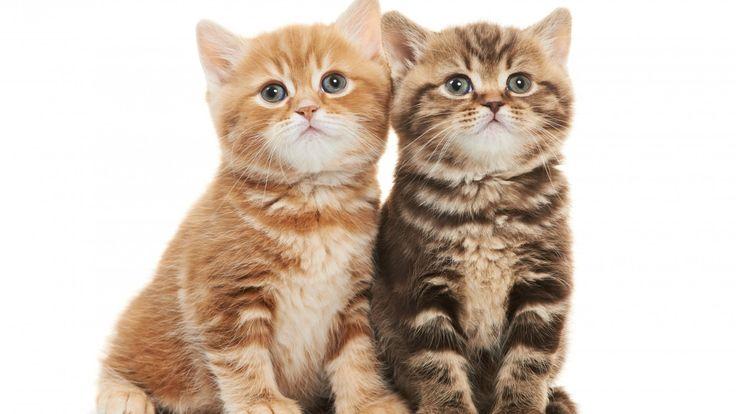 New Lovely Two Kittens 11