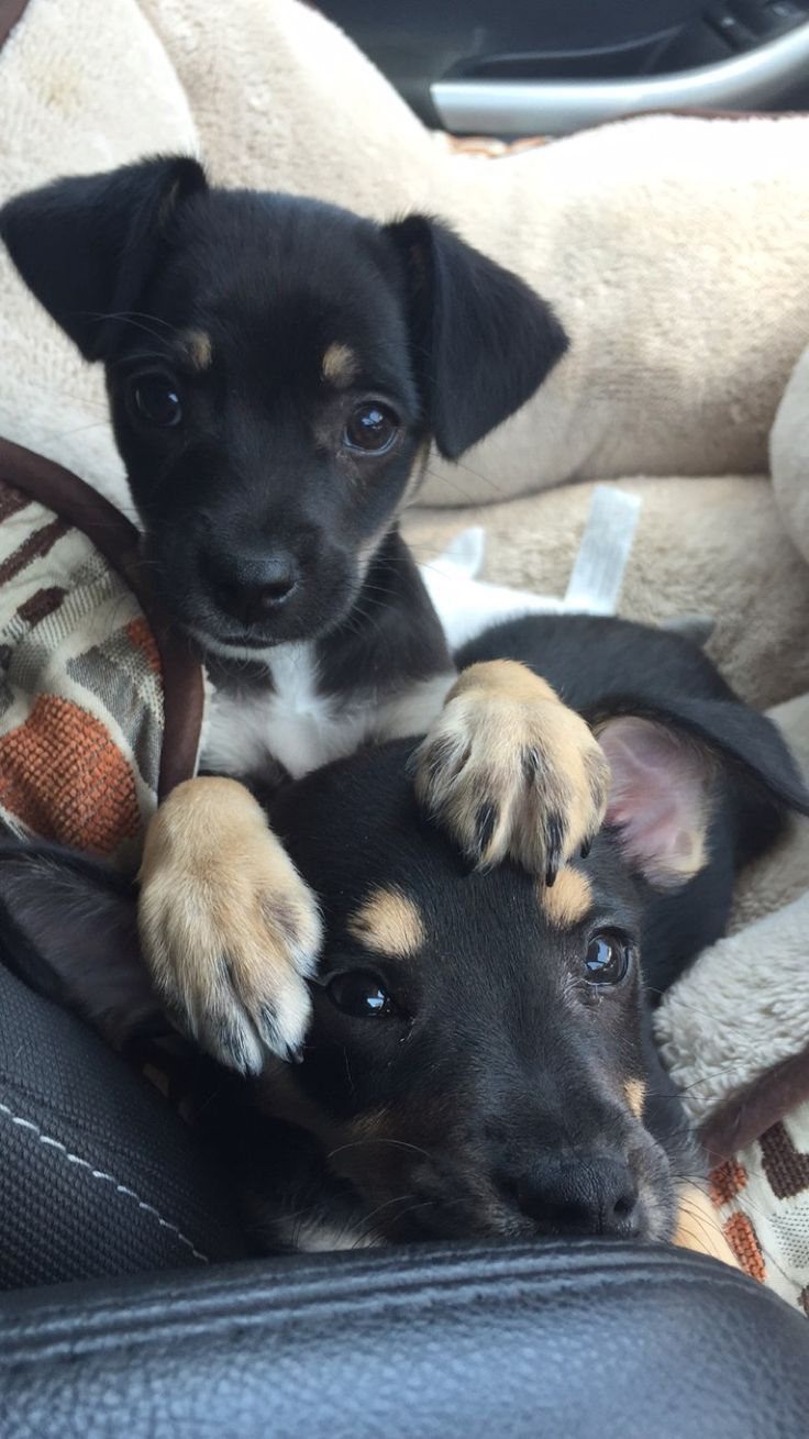 The humane society got me good with a buy one get one half off (Source: http://ift.tt/2boD0bM)