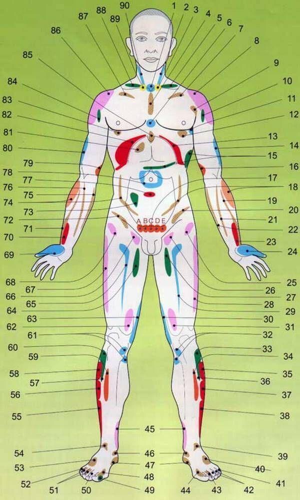 Проекции внутренних органов расположены на коже, мышцах, костях, надкостнице, связках. Представительства на коже могут быть проявлены отеком, зудом, покраснением, псориатическими бляшками, высыпаниями…