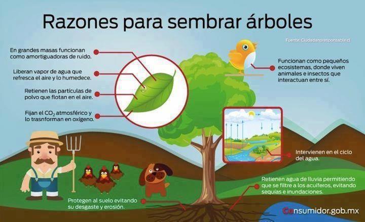 La importancia de los árboles en las ciudades. ¡No puedes vivir sin ellos; mientras más, mejor! =)