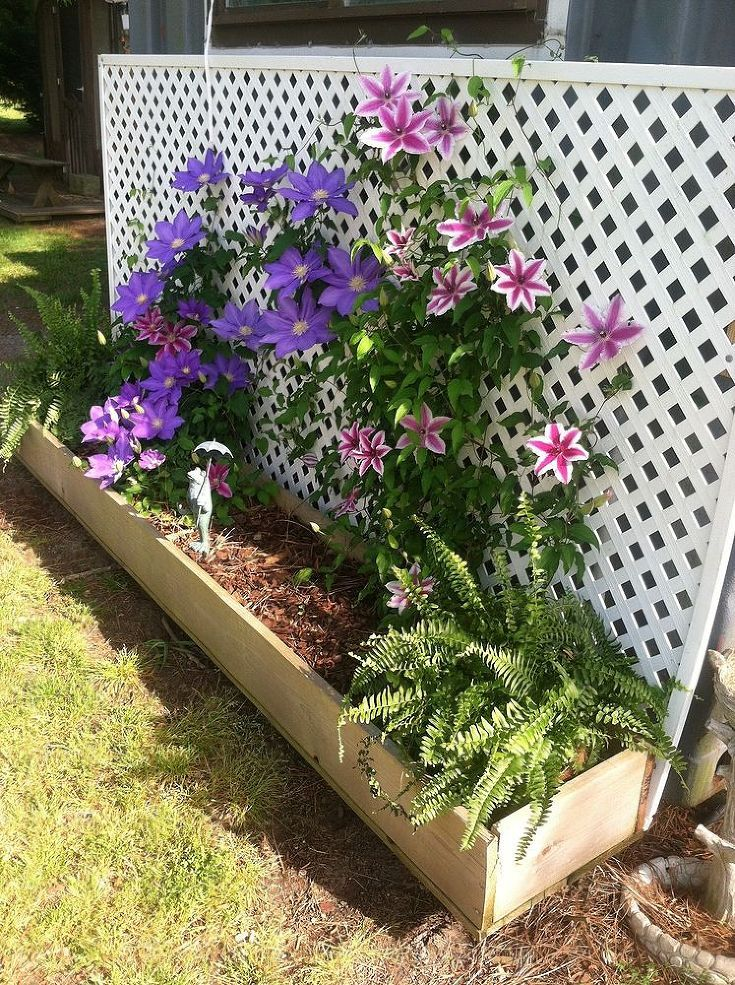 Screen A Steel Container With Charming Clematis Covered Lattice.
