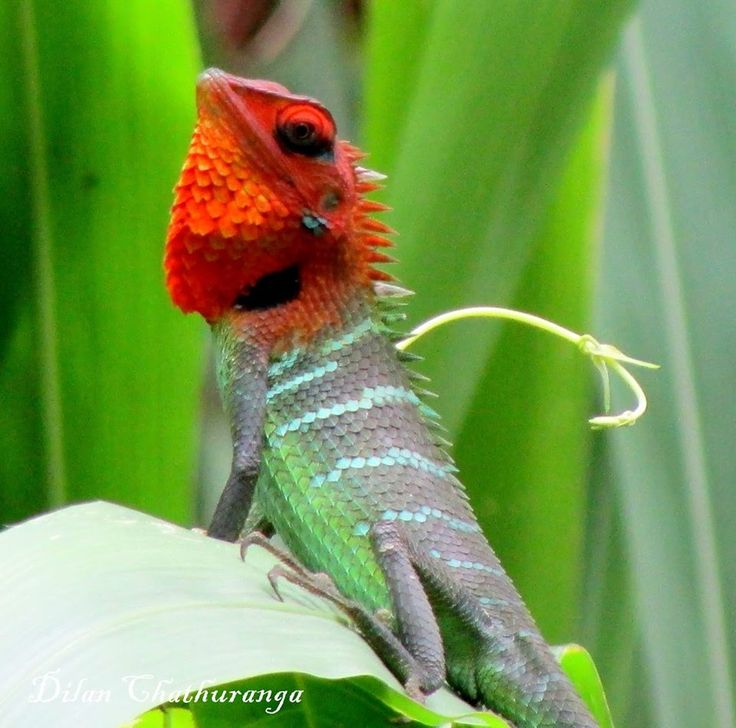 17 Best Images About REPTILES On Pinterest