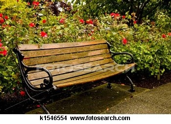 Old Park Bench in Rose Garden Picture