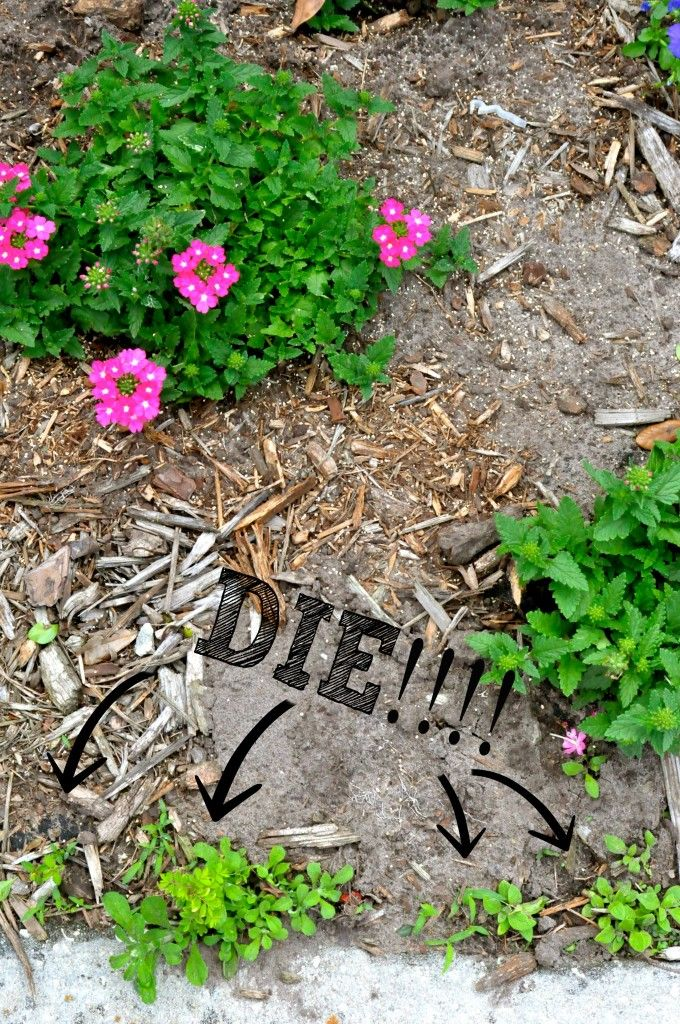 how to get rid of weeds in your lawn