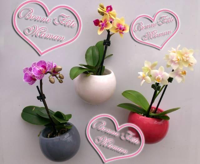 mini orchidées dans des pots-magnets. pour fleurir le frigo !