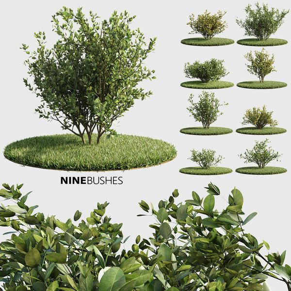 3d Nine Bushes 3d Model 3d Landscape Corona
