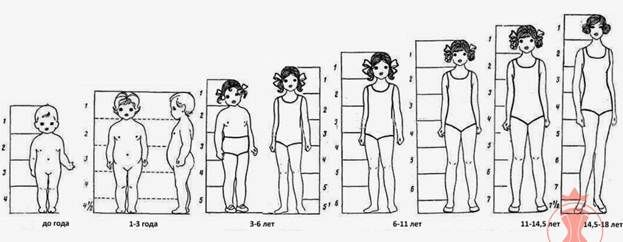 proportions babies and toddlers - Yahoo Image Search Results