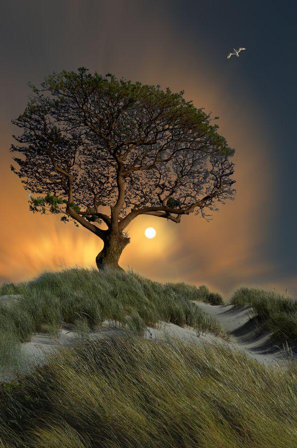 Awesome Nature Scene !