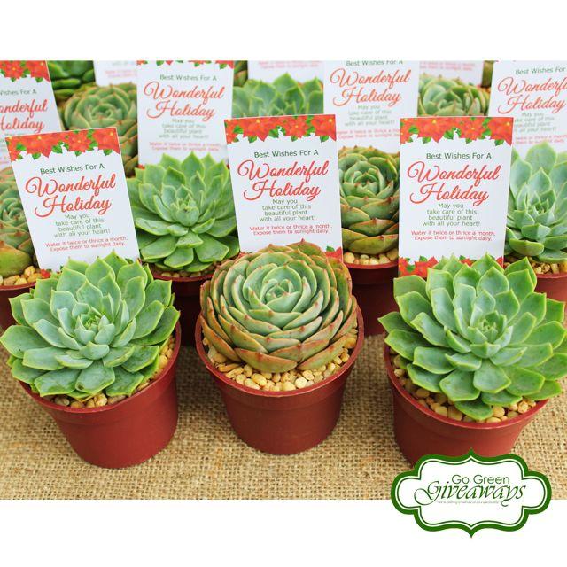 Wedding Theme Ideas Philippines: Succulents Wedding Favors, Succulents Philippines