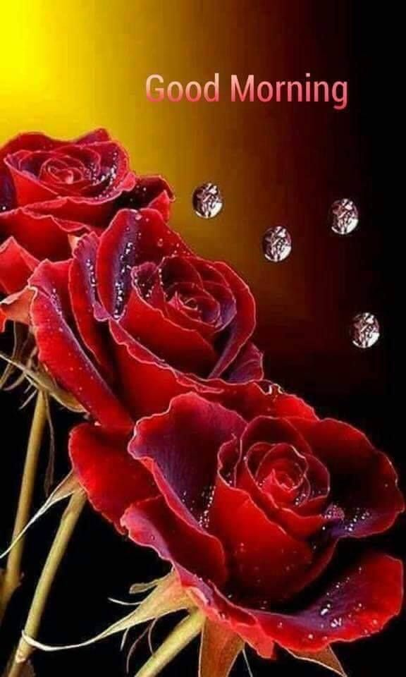 Https Www Facebook Com Beautifulreallovelyrose Photos A 554635821413937 1030370070507174 Type 3 Theater Beautiful Roses Rose Flower Beautiful Flowers