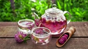 What is Red Clover Tea