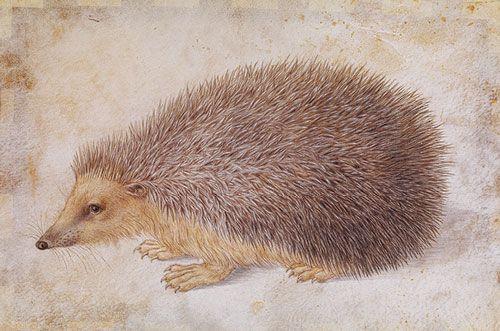Albrecht Dürer (1471–1528) | Thematic Essay | Heilbrunn Timeline of Art History | The Metropolitan Museum of Art