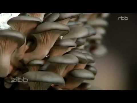 Chidos in Berlin - Pilze auf Kaffeesatz - RBB TV Beitrag - YouTube