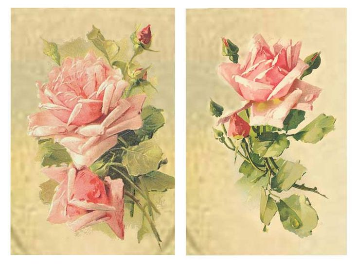 So Shabby Pink Paper Roses You Can Frame