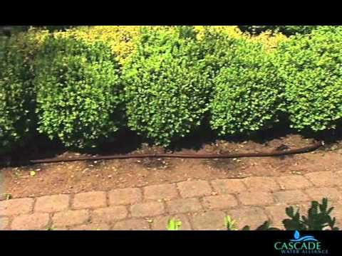 How to Install a Drip Irrigation System by Converting Sprinklers