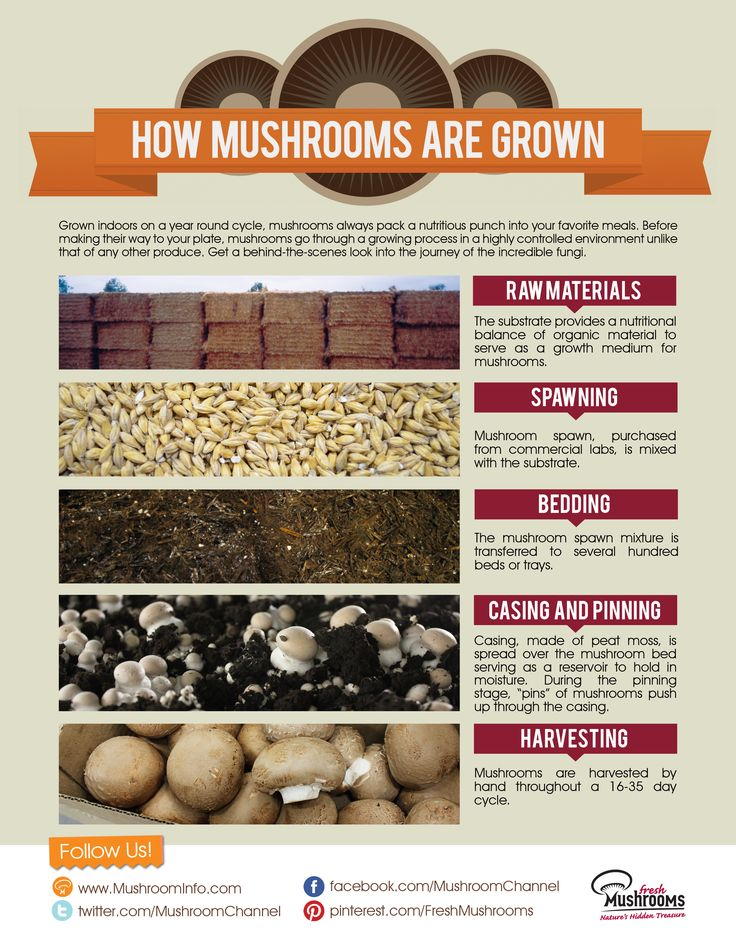 206 Best Growing Mushrooms Images On Pinterest Fungi Garden