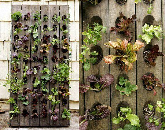 A Space Saving Vertical Salad Garden (wine rack). Good for salad, strawberries - anything needing good drainage.