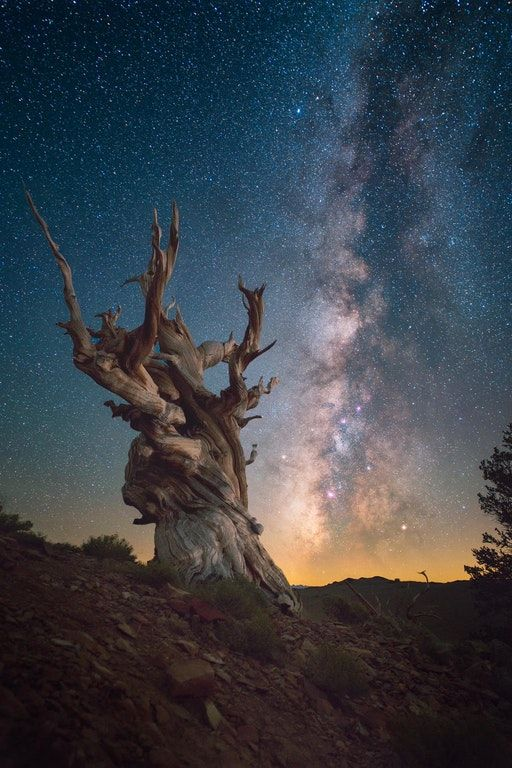 Ancient Bristlecone Pine Forest [OC][2048x3072] : EarthPorn
