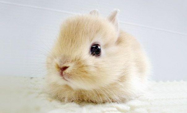 cutest-baby-animals-20__605