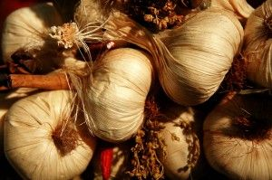 garlic1 e1292010063250 How To Grow Organic Garlic