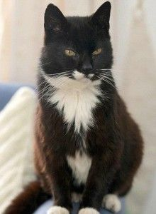 TIL The oldest cat to ever live was named Creme Puff and lived 38 years. Creme Puffs owner had a second cat named Granpa who lived 34 years. Both cats were fed a diet of bacon and eggs asparagus broccoli and coffee with heavy cream.