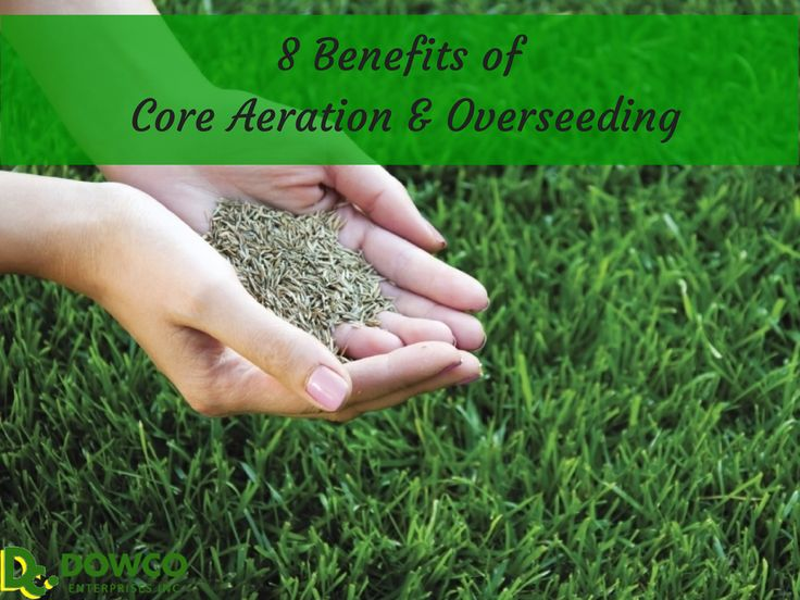 8 Benefits Of Core Aeration And Overseeding For Your Lawn