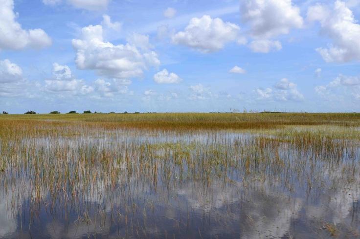 Everglades @Miami, USA - 08.12  #everglades #miami #USA