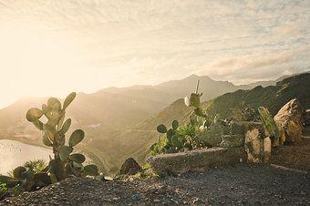 *** 750 *** SOMMER, SONNE, KAKTUS Mehr Teneriffa: http://www.photocase.de/collection.asp?l=230102 #Tenerife #photography #stock
