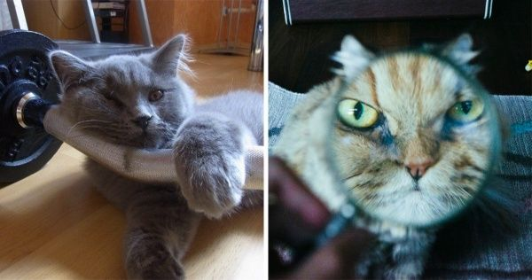 20 Fresh Photos That Prove There's Nothing More Exciting Than a Cat's Life
