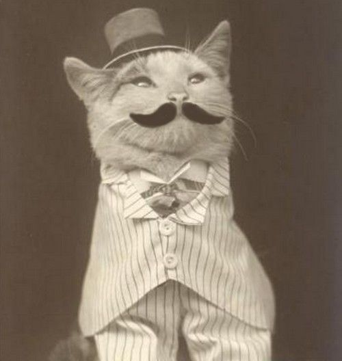 how cute.... Dust Jackets, Funny Cat, Funny Stuff, Things,  Dust Covers, Kitty, Book Jackets, Animal,  Dust Wrappers