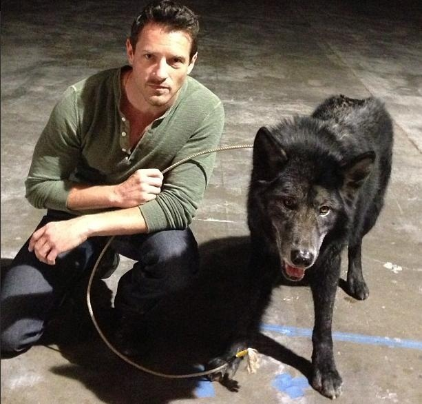 Ian Bohen (Peter Hale) and a wolf on the set of Teen Wolf.