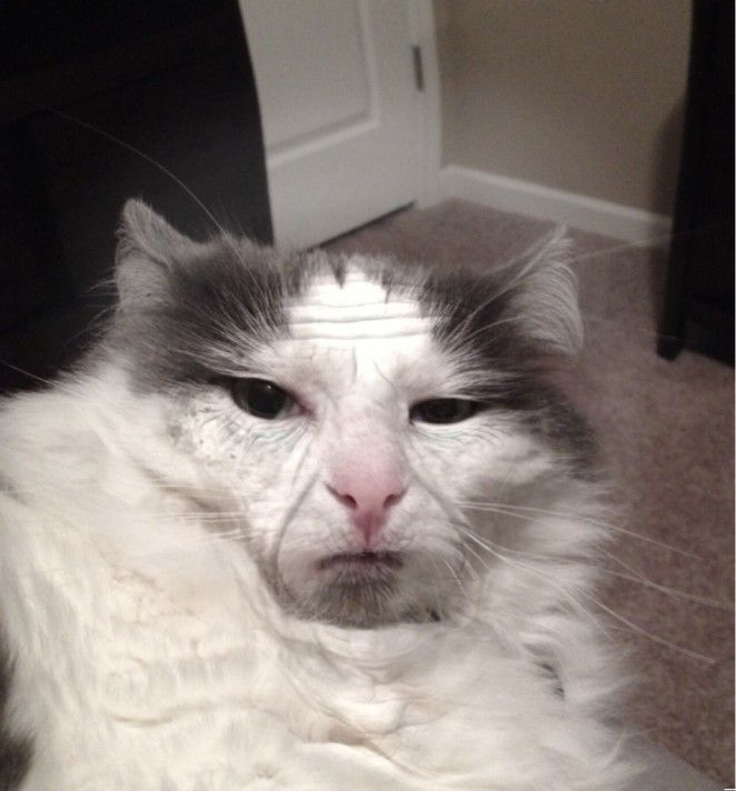 Funny Cats - I aged my cat 60 years with an ageing app. (268 Pics)