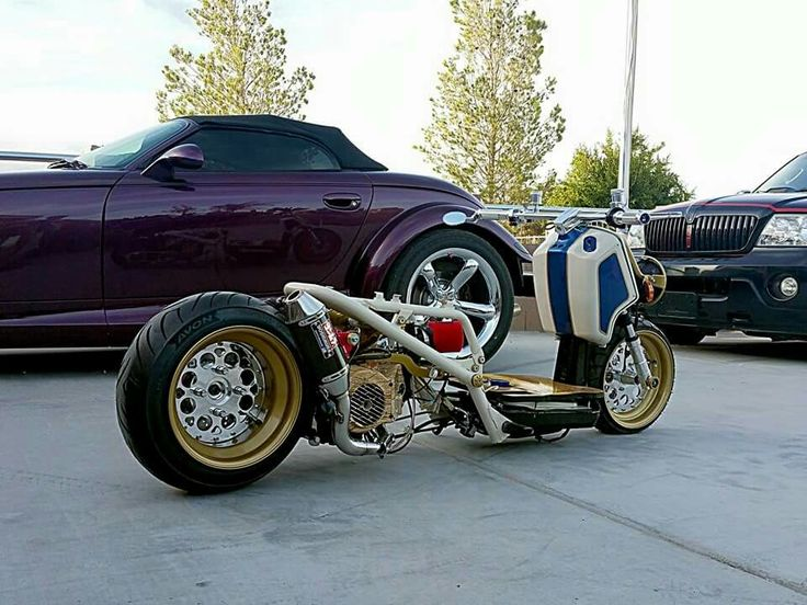 86 Best Ruckus Images On Pinterest
