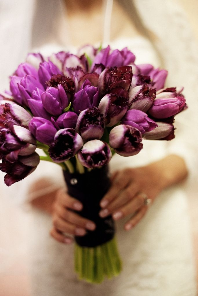 he GORGEOUS bride carried a monochromatic bouquet of purple parrot and plum fringe tulips wrapped in aubergine double-faced satin ribbon and detailed with crystal pins